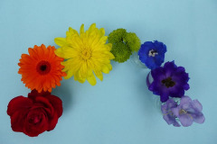 Janet Coley: Rainbow of Flowers