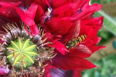 Miggy Wild: Wasp