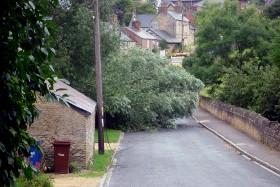 fallentree1
